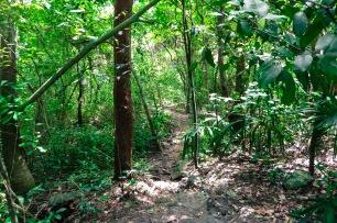Jungle mexicaine
