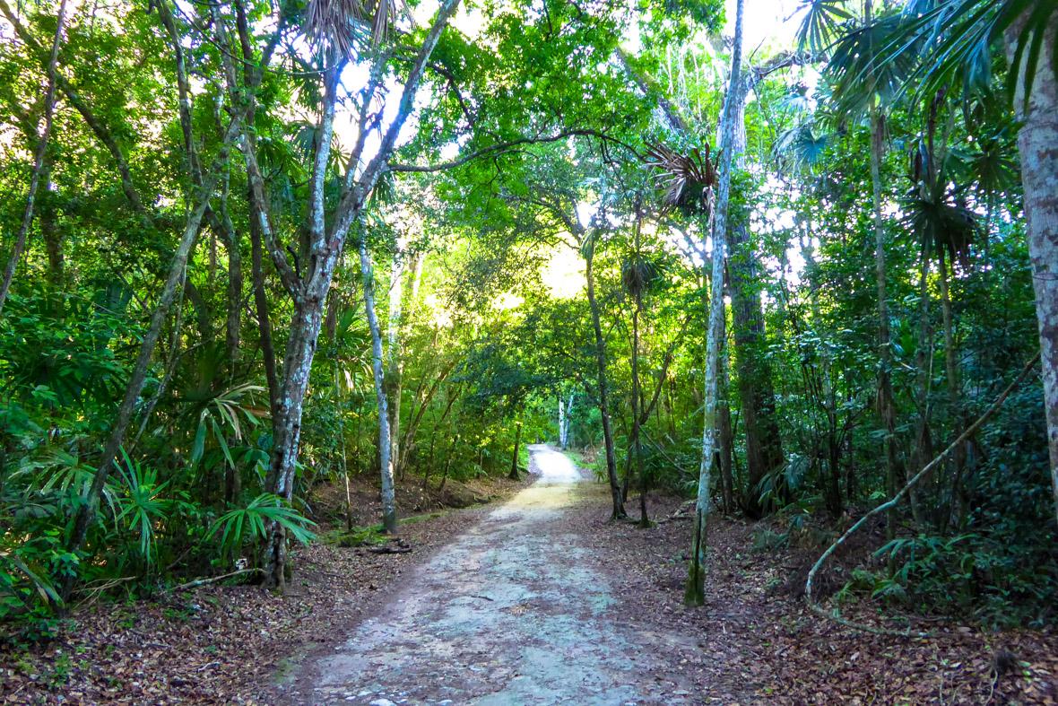 forêt du mexique