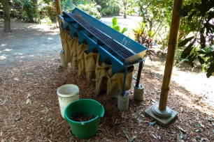 Calibrage des noix
