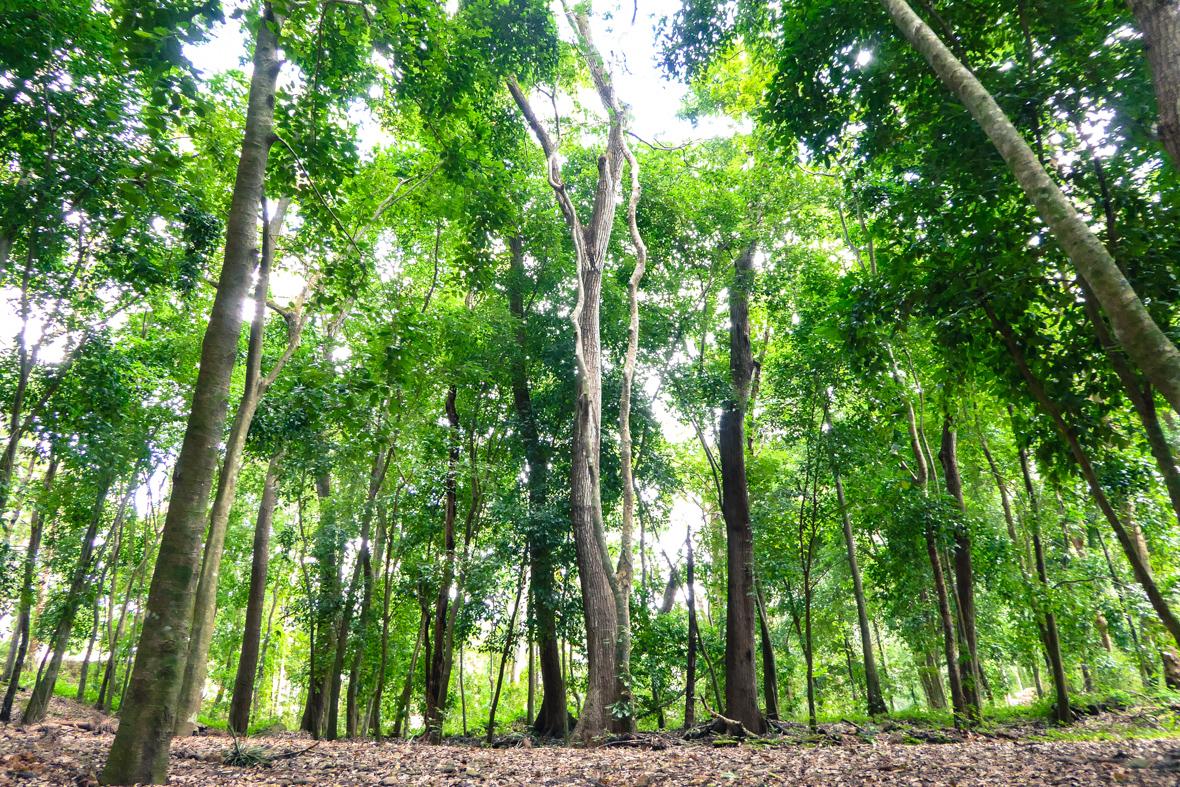 forêt honduras