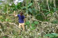 Découpe de branches