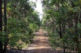 Ancienne voie de chemin de fer réhabilitée