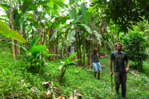 Promenade entre les bananiers